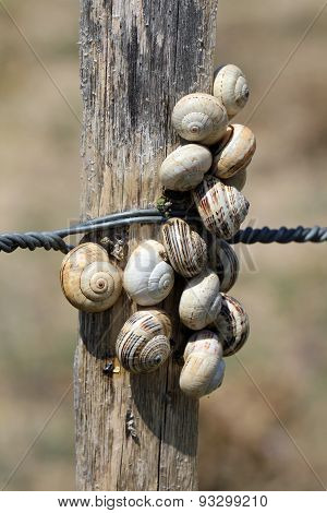 Snails dunes on a fence
