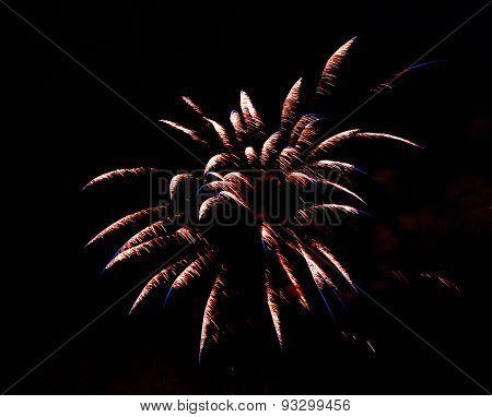Celebration Firework In The Black Night Sky