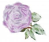 image of single white rose  - illustration with single lilac rose flower isolated on white background - JPG