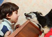 stock photo of preteen  - preteen handsome boy and his  shepherd puppy  - JPG