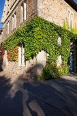 picture of ivy  - Traditional corner house covered in ivy - JPG