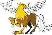picture of winged-horse  - Illustration of a hippogriff or hippogryph legendary creature with front quarters of an eagle and the hind quarters of a horse on isolated background done in cartoon style - JPG