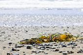 pic of pacific rim  - Seaweed on sand Long Beach in Pacific Rim National Park Canada - JPG
