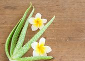 stock photo of aloe-vera  - Close up Aloe vera and frangipani flower on wooden table - JPG