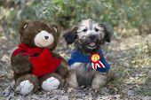 pic of stuffed animals  - Puppy dog love with stuffed animal friend - JPG