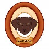 pic of bird-dog  - Chocolate Labrador Retriever dog portrait in cherry wood mat frame - JPG