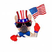foto of bulldog  - french bulldog waving a flag of usa on independence day on 4th of july isolated on white background behind a white and blank banner placard - JPG