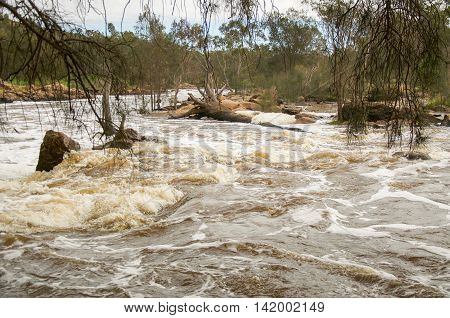 Rushing white waters at the Bell Rapids with lush treed landscape in the Swan Valley in Western Australia.