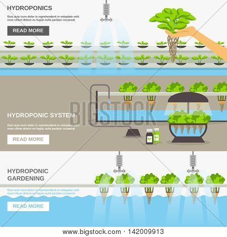 Color flat horizontal banners about hydroponic system gardering with text field vector illustration