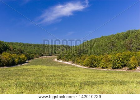 rolling hills and meadow with green grass