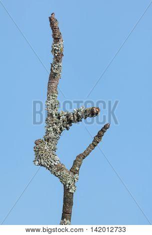 Wizen Branch
