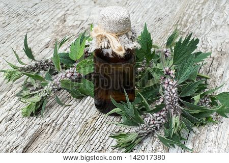Motherwort (Leonurus cardiaca) and pharmaceutical bottle. Other names: throw-wort lion's ear and lion's tail. Used in herbal medicine it is a valuable honey plant