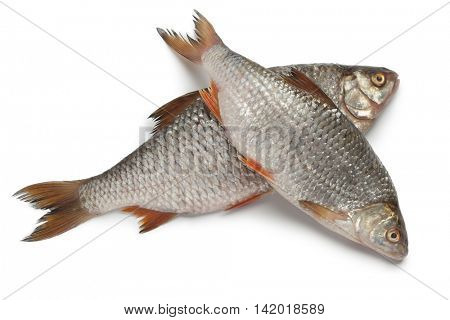 Pair of fresh raw common roach on white background