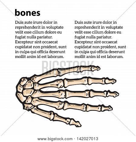 bones of the human hand, illustration sketch isolated on white background. anatomical image of bone structure of human hand. Colored bone human finger, brochure on bone rengene