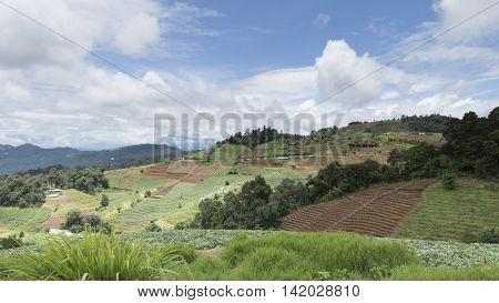 View Of Vegetable Terrace, Mountain Hill And Tropical Forest