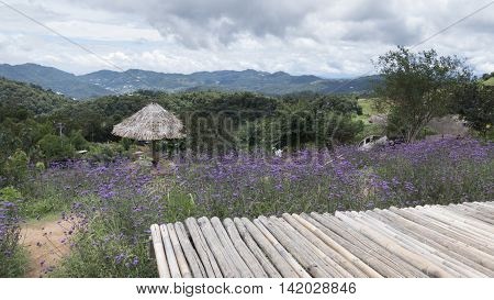 Bamboo Seat, Verbena Flower With Mountain View