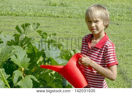 Young boy watering vegetables in the family vegetable garden using a red plastic watering can. Family, healthy, gardening, lifestyle concept
