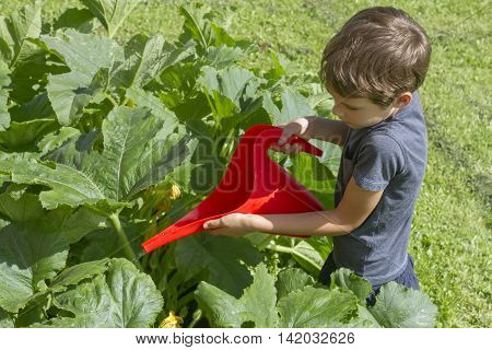 Child watering vegetables watering can. Healthy, gardening, lifestyle concept