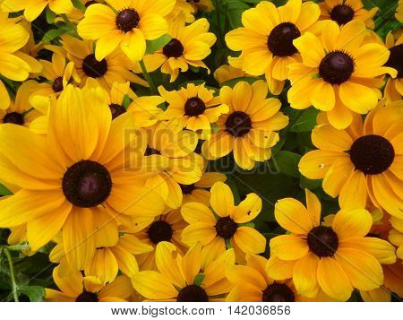 a very beautiful yellow flower decorative background