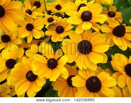 Beautiful Yello Flower Decorative Background