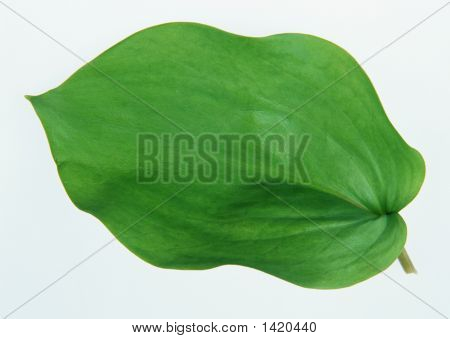Speciale Leaf