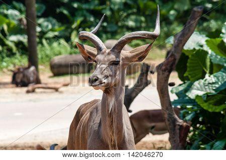 Beautiful antelope posing in her natural environment