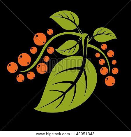 Simple green vector tree leaf with tendrils and orange seeds stylized nature element.