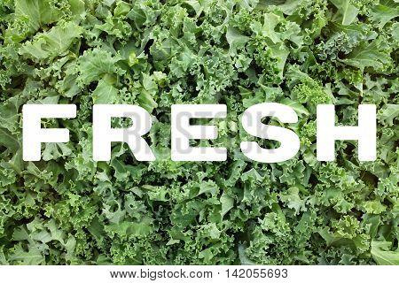 Fresh Text Over Shredded Kale Leaves Background