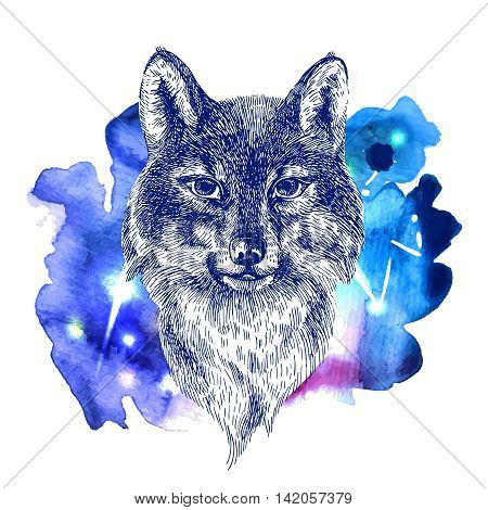 Beautiful hand drawn vector illustration sketching of wolf on space watercolor background. Tattoo style drawing. Use for postcards, print for t-shirts, posters, case for smartphone