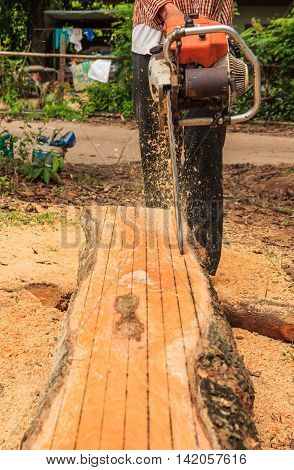 Man cuts wood with engine sawing in the afternoon