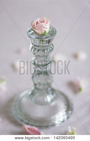delicate pink rose bud in a glass candlestick on a pink background