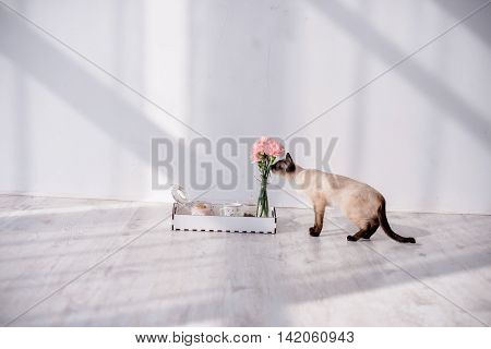 Siamese cat sniffing flowers on a tray with breakfast