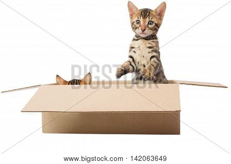 two kittens are playing hide and seek in the box