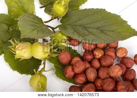 Branch of a hazel and mature nuts on a white background.