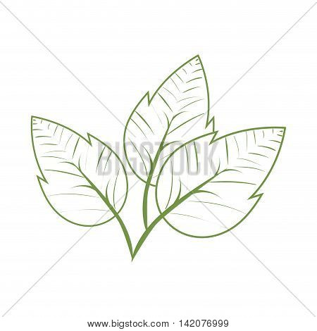 plant green leaves ecology leaves silhouette vector graphic isolated and flat illustration