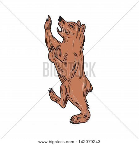 Drawing sketch style illustration of an American black bearUrsus americanus a medium-sized bear native to North America prancing viewed from the side set on isolated white background.