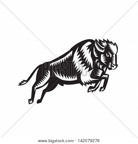 Illustration of an American bison or buffalo jumping viewed from the side set on isolated white background done in retro woodcut style.
