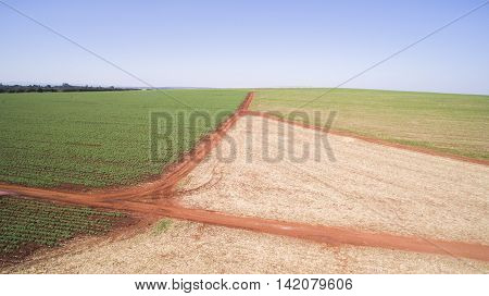 Aerial View Of The Potatoes Plantation In Sao Paulo State- Brazil