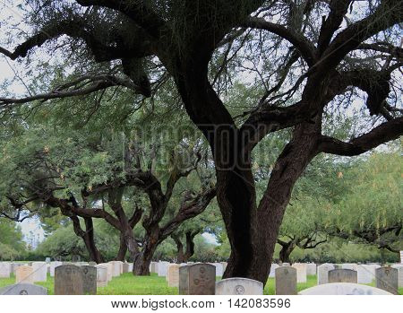 Ominous Desert Trees located in a Creepy Cemetery