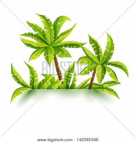 Coconut palms in tropic jungle forest. Tropical plants. Green leaves. Nature fragment. 3d effect shadows. Copyspace. Place for text. Design layout. Travel concept isolated on white. Rasterized