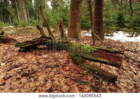 Wild nature with old trees in the Czech Republic