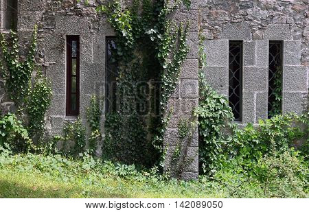grey stone wall of old Vorontsov Palace overgrown with green ivy in Crimea
