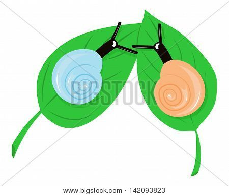 Two snails have met on the leaves. Vector illustration