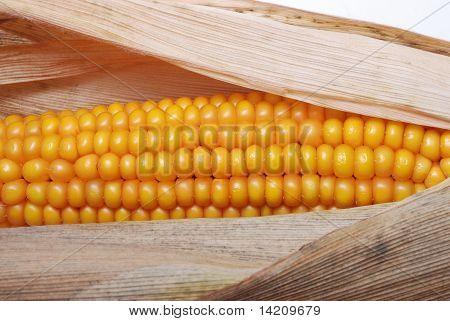 Ein Ohr reif Mais
