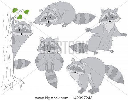 Vector cute funny grey striped raccoon set