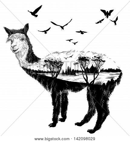 Vector Hand drawn alpaca for your design wildlife concept