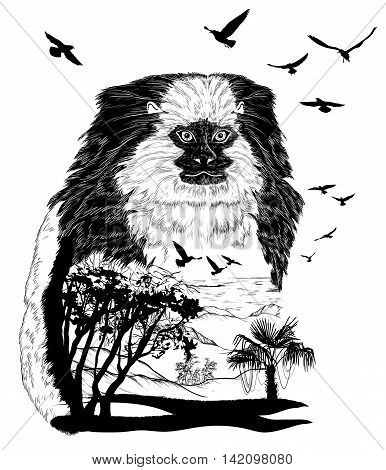 Vector Hand drawn Monkey marmoset for your design wildlife concept