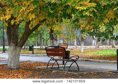Wrought-iron benches in the park autumn sorrow