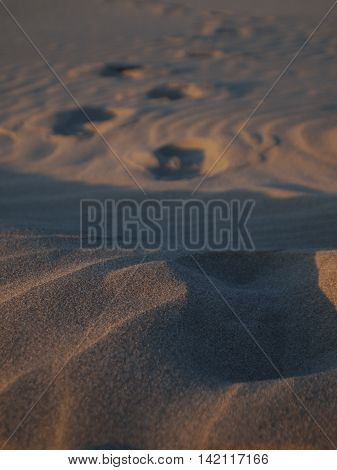 Sand Footprints in Rippled Sand at Sunset