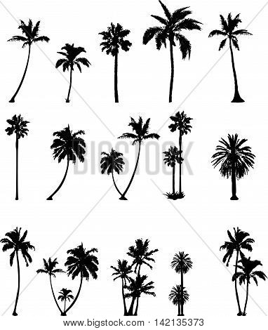 collection of palm silhouttes on the white background
